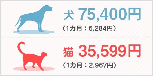 子犬 ペット保険 比較